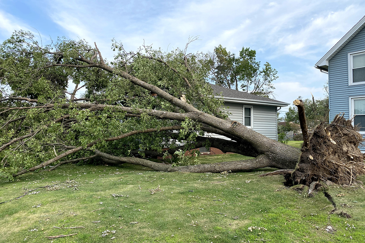 Tree Removal Service, Tree Stump Removal - Storm Damage ...